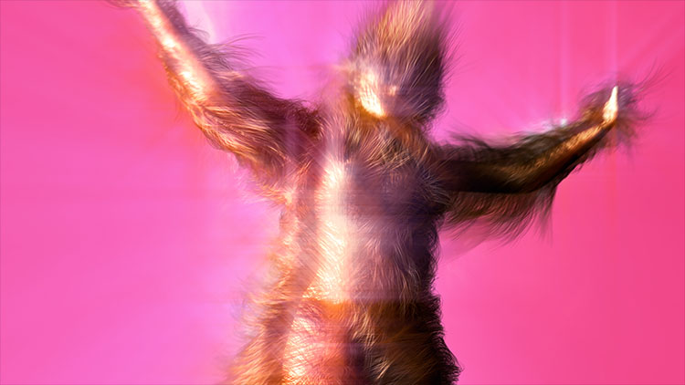 two nude girls covered with body hair, still form Sway is a non-narrative computer generated film that celebrates body hair and rock gods. Directed, animated and composed by Faiyaz Jafri
